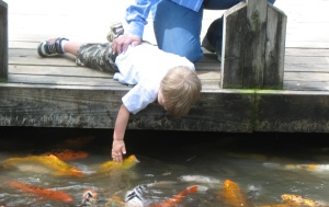 My three year old tries to pet the koi fish.